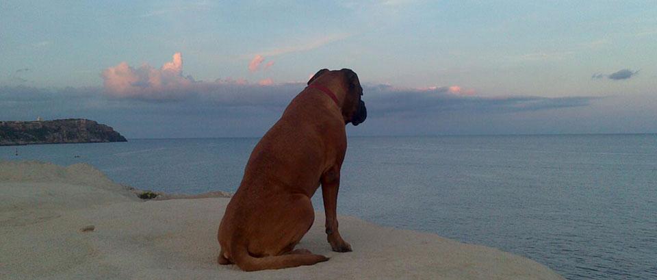 linda-frente-al-mar